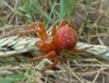 Cornedo Vicentino (Vi) - Isopode - Oniscidae, Porcellionidae? - ultimo messaggio di @Lumumba